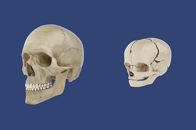 skulls_01