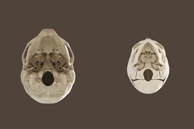 skulls_02